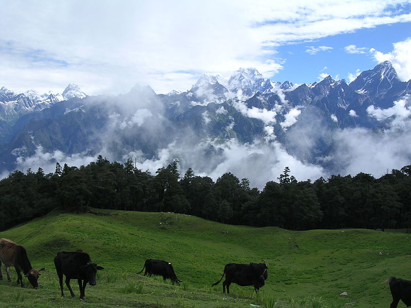 View of Himalayas from Auli
