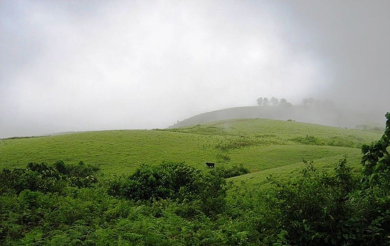 Green Meadows of Vagamon, Kerala