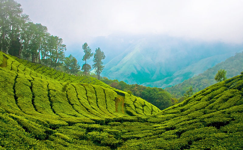 800px-Munnar_Top_station