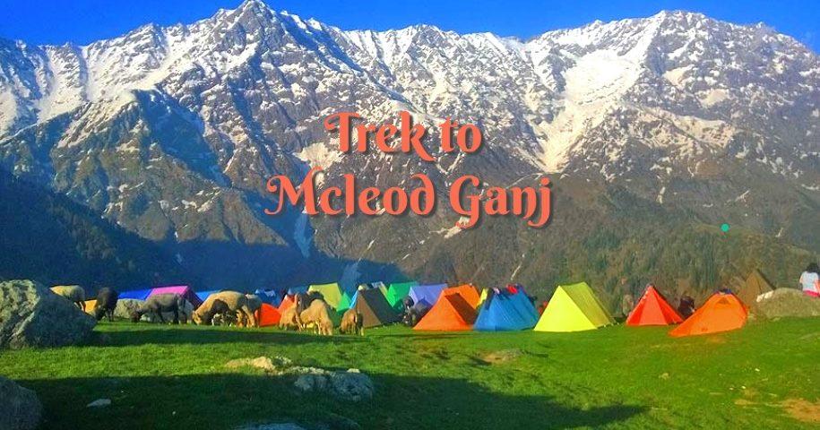mcleodganj-trekking-tour