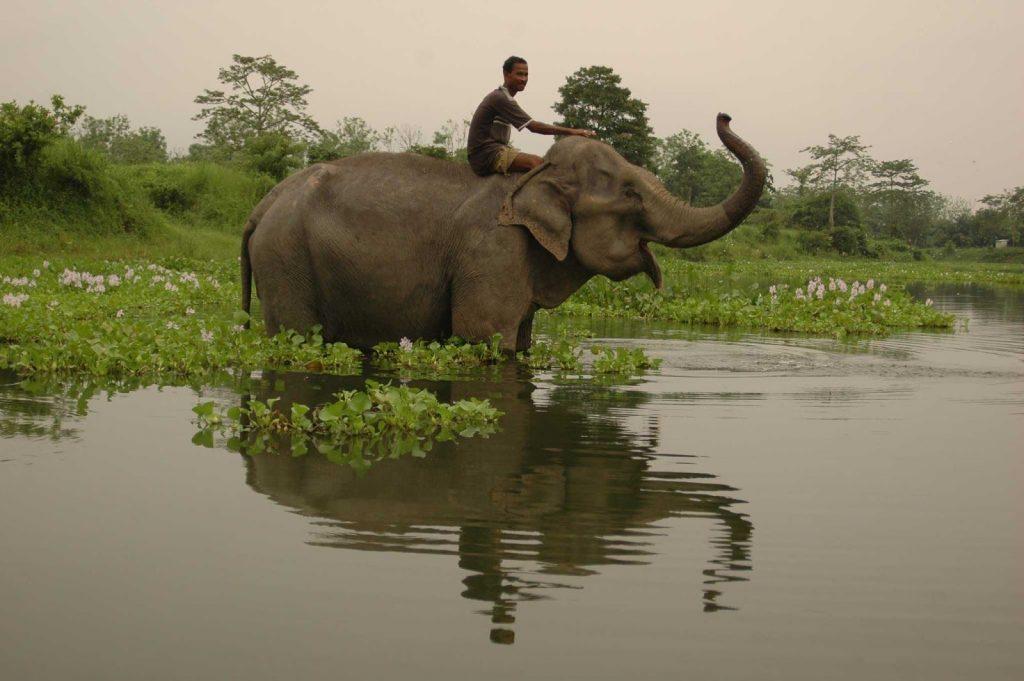 Manas wildlife