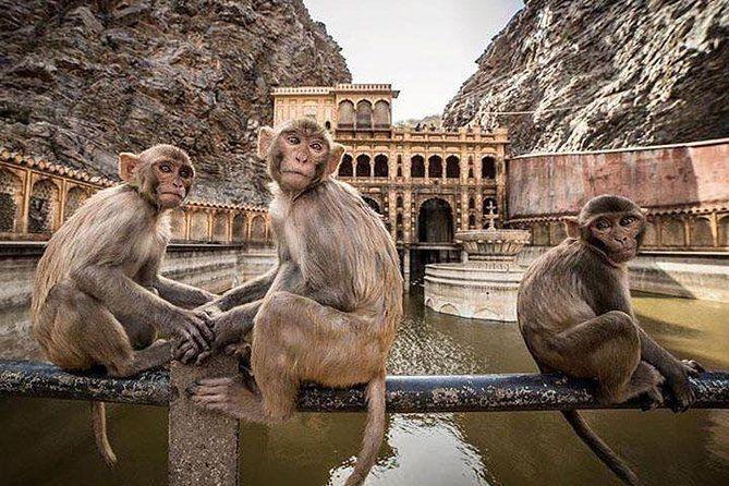 Monkey Temple in Jaipur