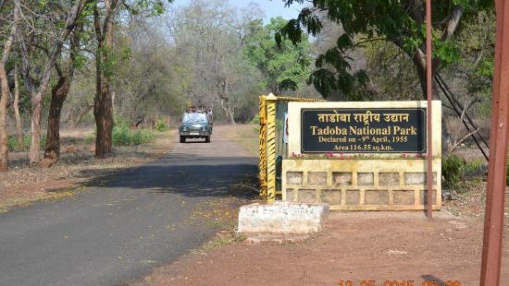 Tadoba Andhari Safari