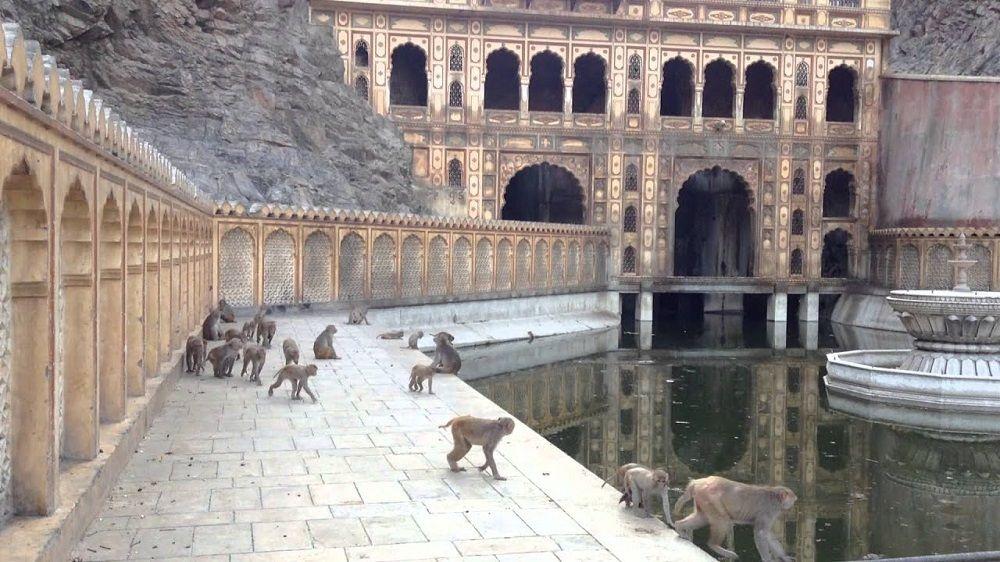 monkey temple galtaji