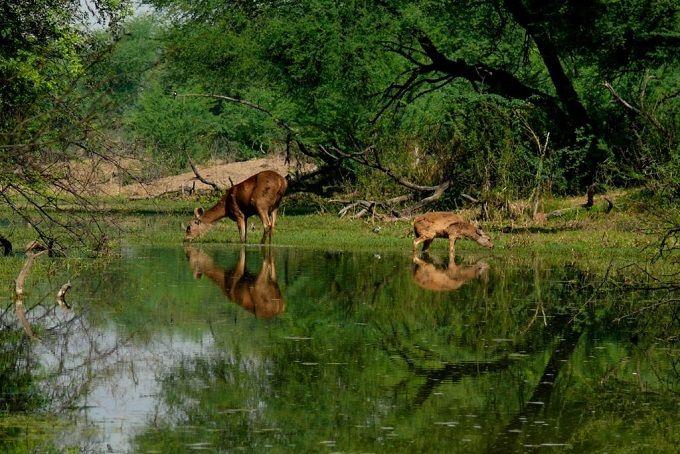 Bandh Baretha Wildlife Sanctuary