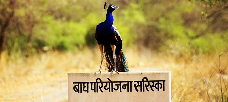 sariska national park