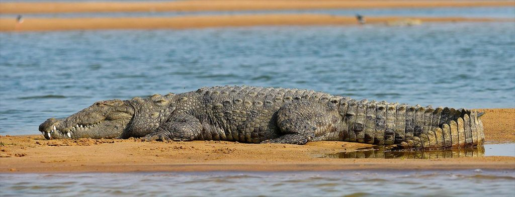 Safari at National Chambal wildlife sanctuary