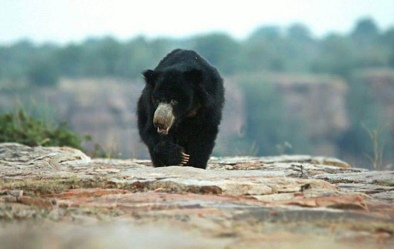 Jawahar Sagar Wildlife Sanctuary