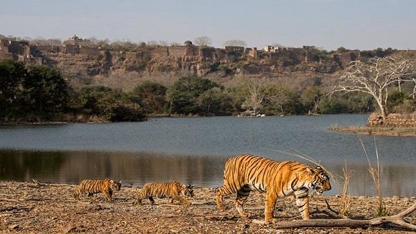 Sawai Man Singh Wildlife