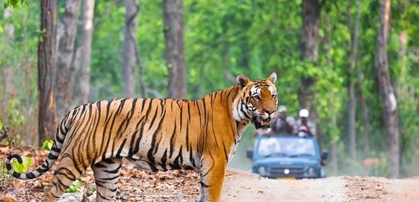 Van Vihar Wildlife Sanctuary