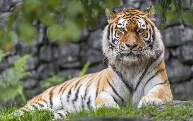 Kailadevi Wildlife Sanctuary