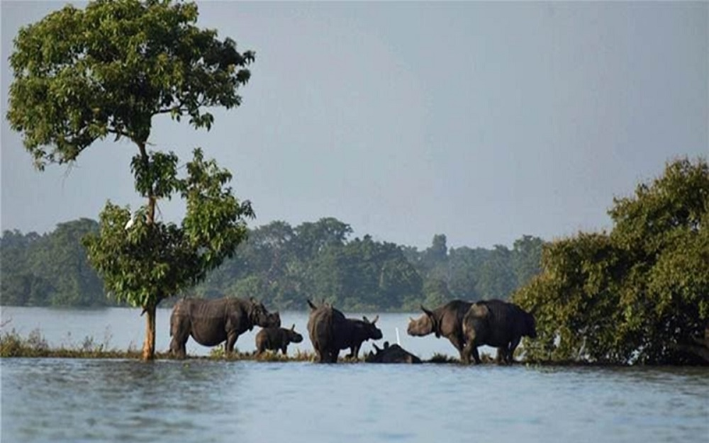 Kaziranga national park during flood in Assam