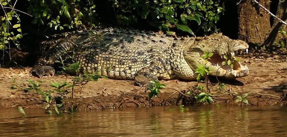 Bhitarkanika Wildlife Sanctuary