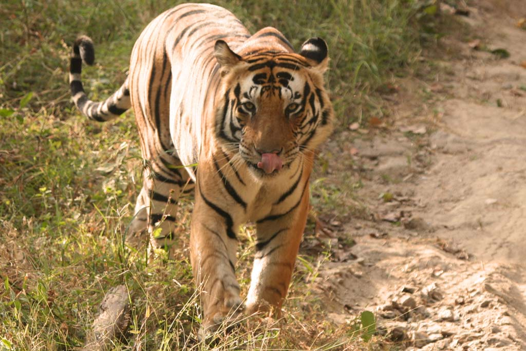 Bandhavgarh Tiger Safaris in Madhya Pradesh India