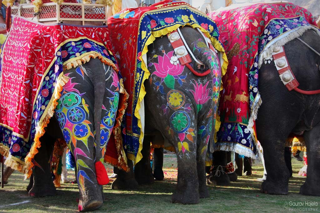 Pictures Of Painted Elephants