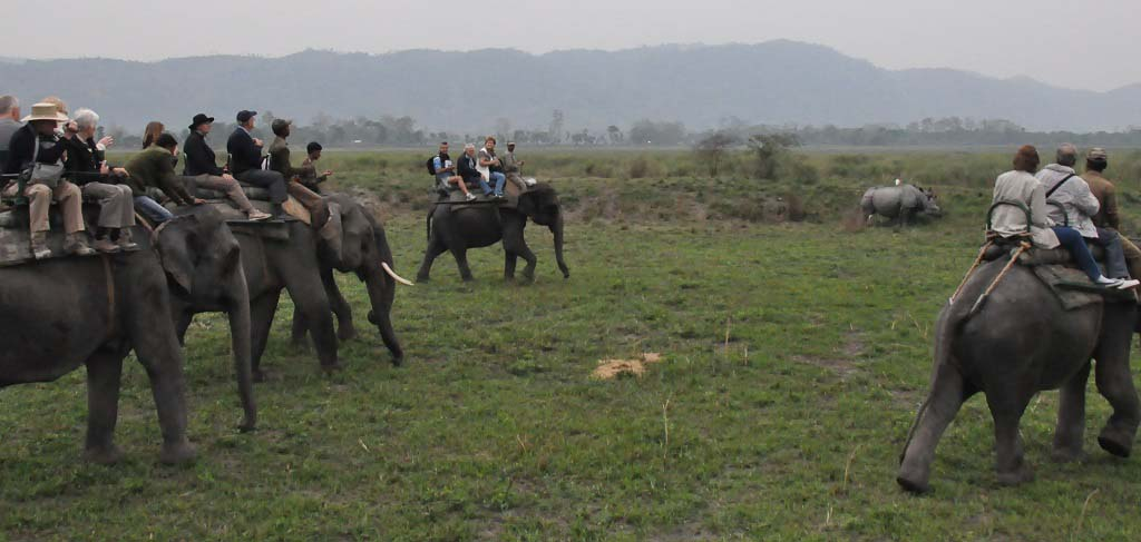 Elephant Safari at Kaziranga National Park Assam India