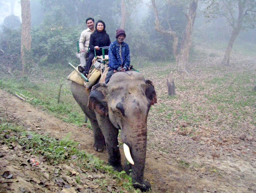 Elephant Safari at Nameri National Park Assam India