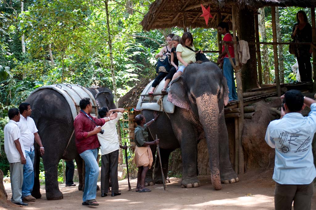 Elephant Safari in Thekkady Kerala