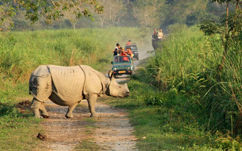 Jeep Safari at Kaziranga National Park Assam India