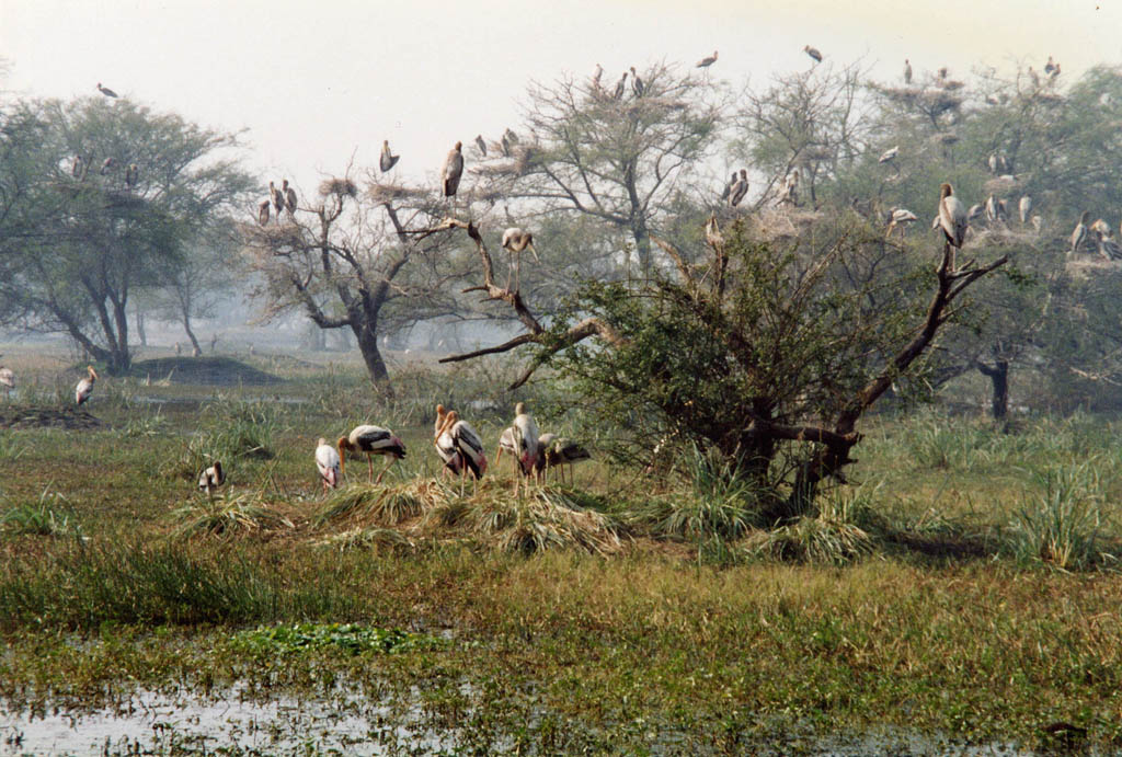 Bharatpur Wildlife Tour