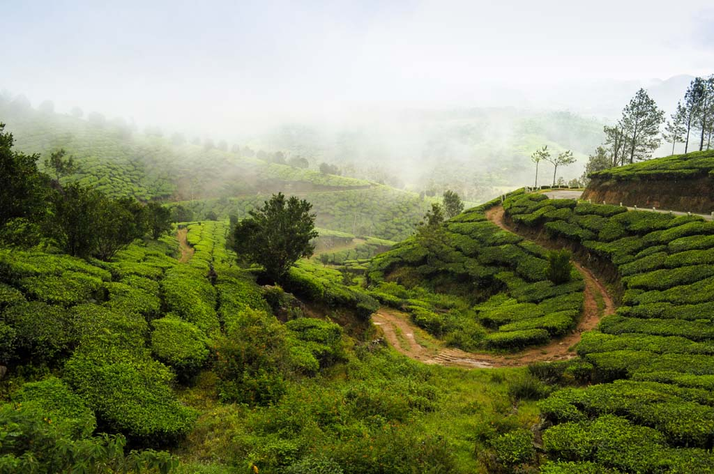 Munnar Package Tour