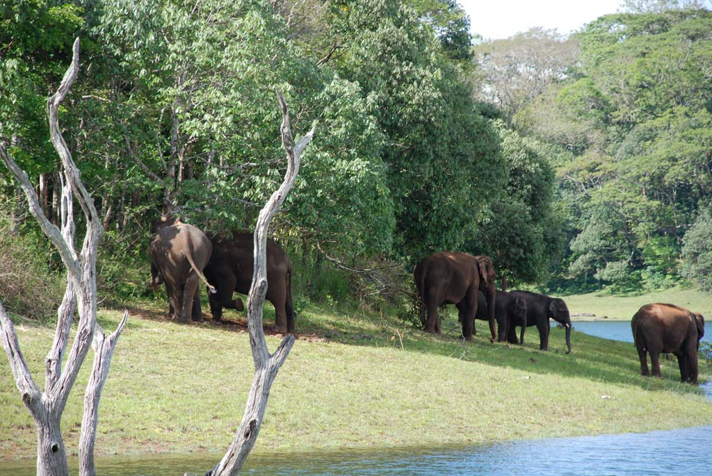 Periyar Wildlife National Park in Kerala India