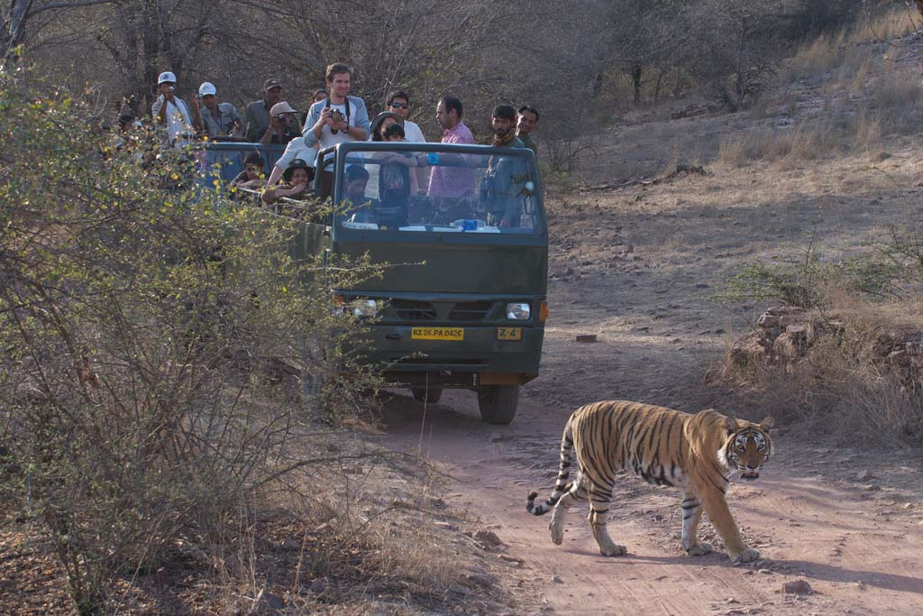 Ranthambore Tour Packages, Ranthambore Tours