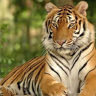 Wildlife Indian Tiger Trail Tour